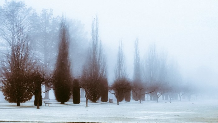 14. When trees disappear into a foggy distance, you have to wonder where they are leading you.