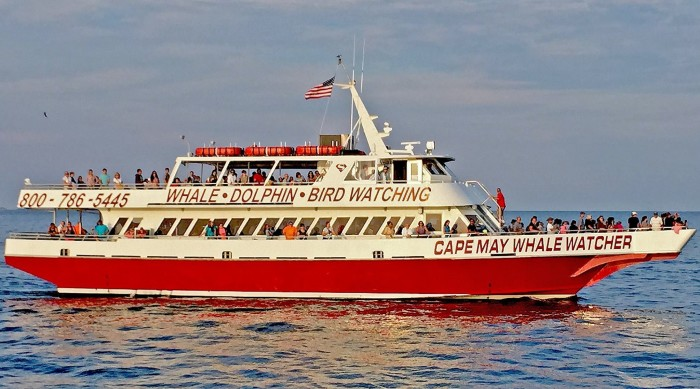 5. Cape May Whale Watcher