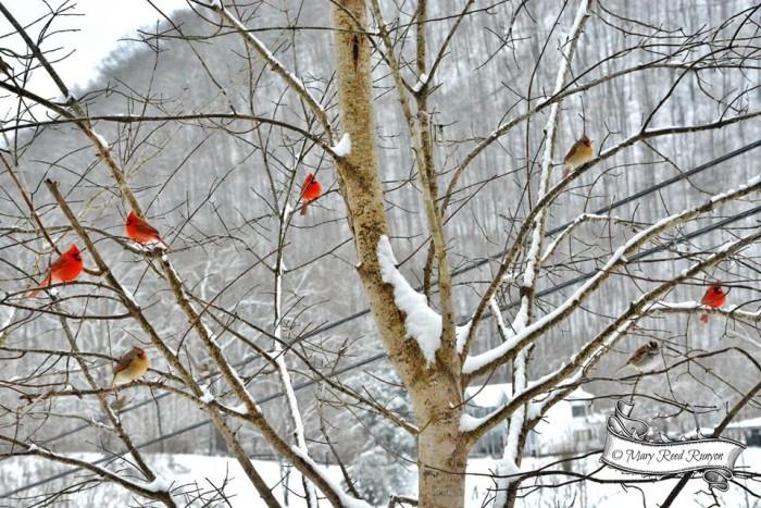 15. Cardinals