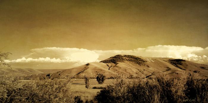 Colorado Seia (flickr:random flecks)