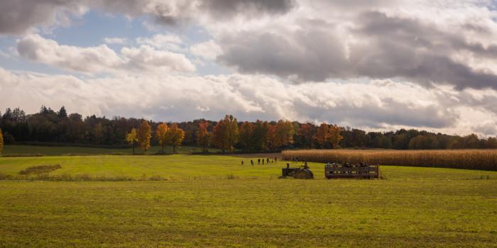 3. Beautifully framed, a Syracuse pumpkin patch.
