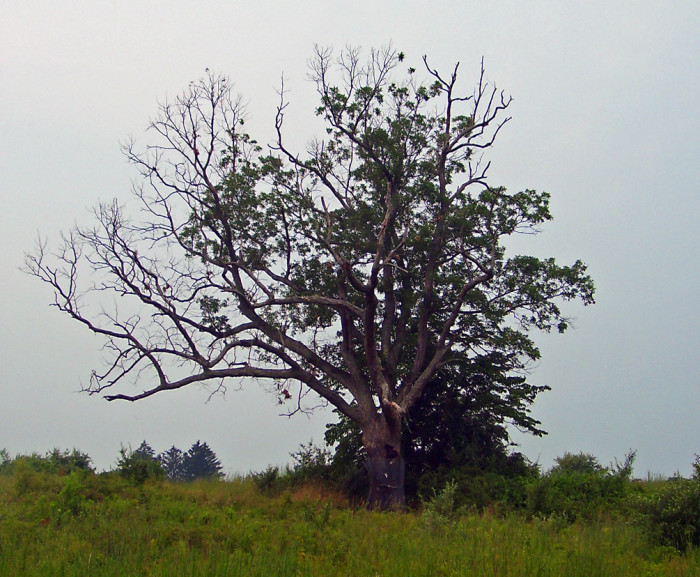 8. The Devil's Tree.