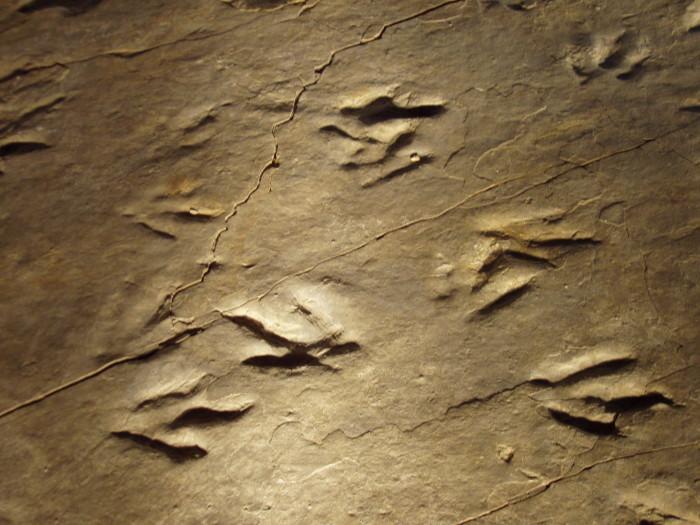 2. Dinosaur Tracks, Rocky Hill