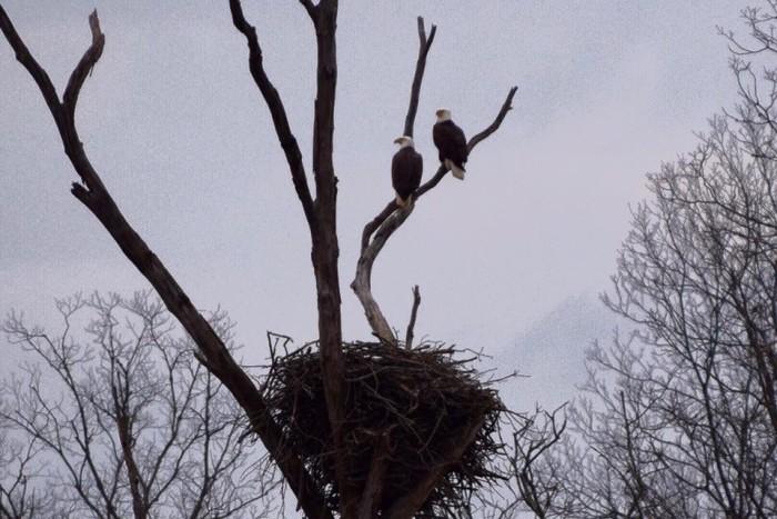 13. Eagle's nest
