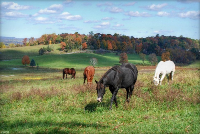 8. Just a small portion of New Jersey's 700,000+ acres of farmland. Photo shot in Fredon.