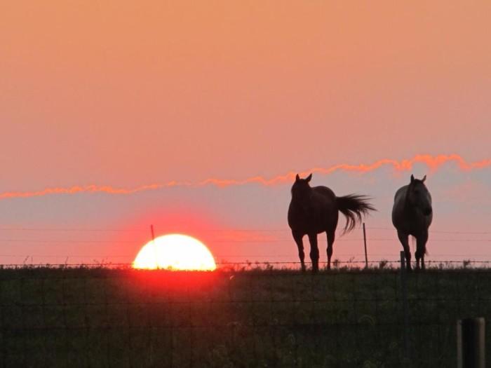 10. Horses at sunset
