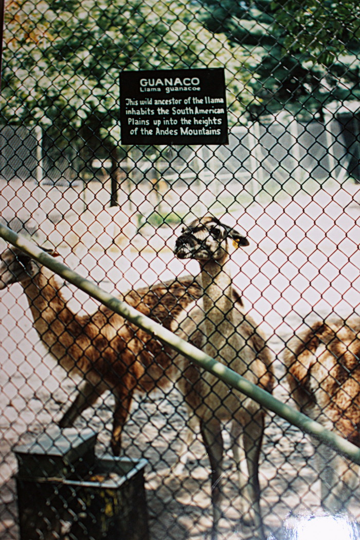 Once the world's largest privately owned zoo, the Catskill Game Farm wasn't actually recognized by the U.S. Department of Agriculture until 1958.
