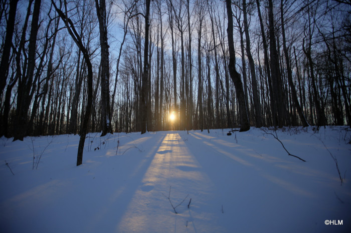 9. The wooded areas, beautiful even in the depths of winter