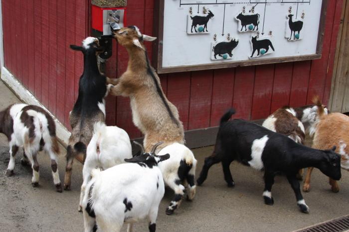 7. Ross Park Zoo, Binghamton