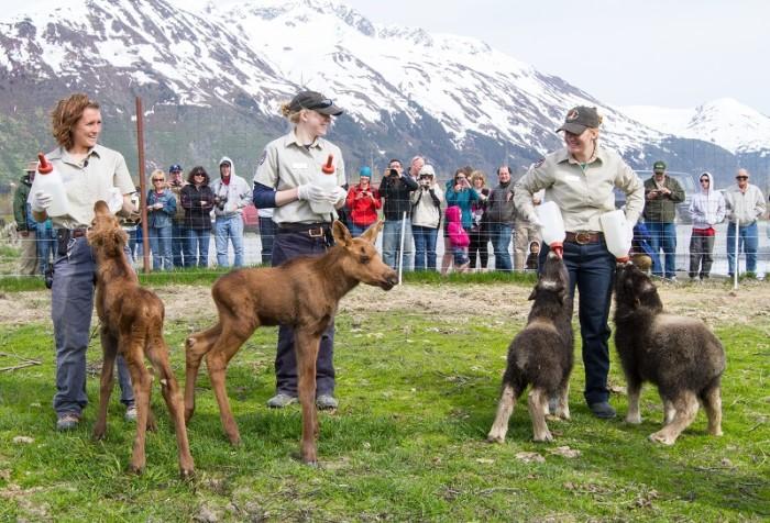 1. Alaska Wildlife Conservation Center