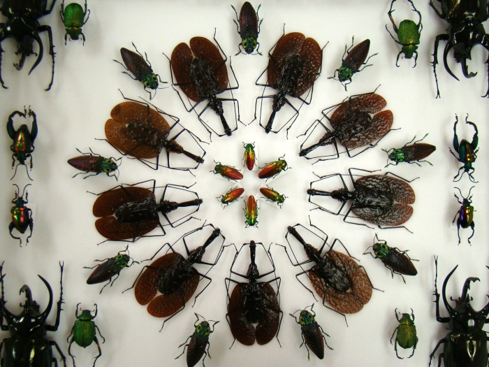 5. New Jersey has its very own bug museum - Insectropolis in Toms River. It's actually pretty cool.