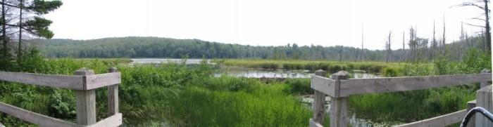 4) Lily Pond Trail