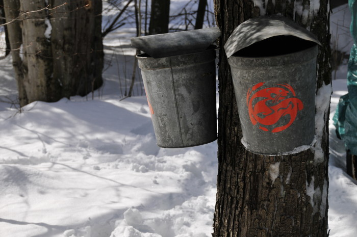 Maybe you're looking to literally take things slow, and enjoy some maple trapping!