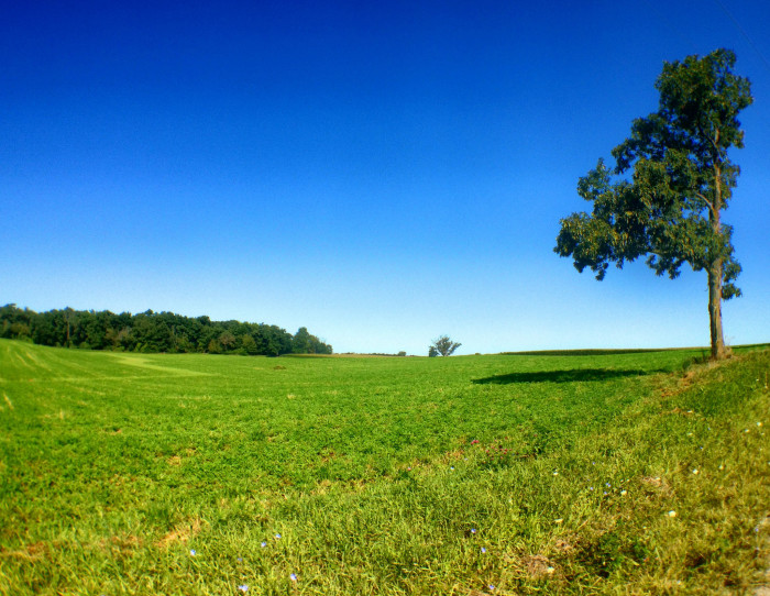 7. Corn fields in rural Ann Arbor.