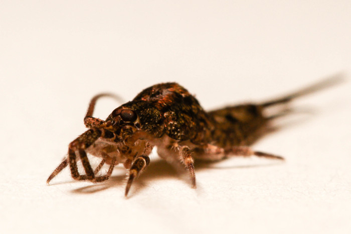 12 Creepy Bugs Found In New York