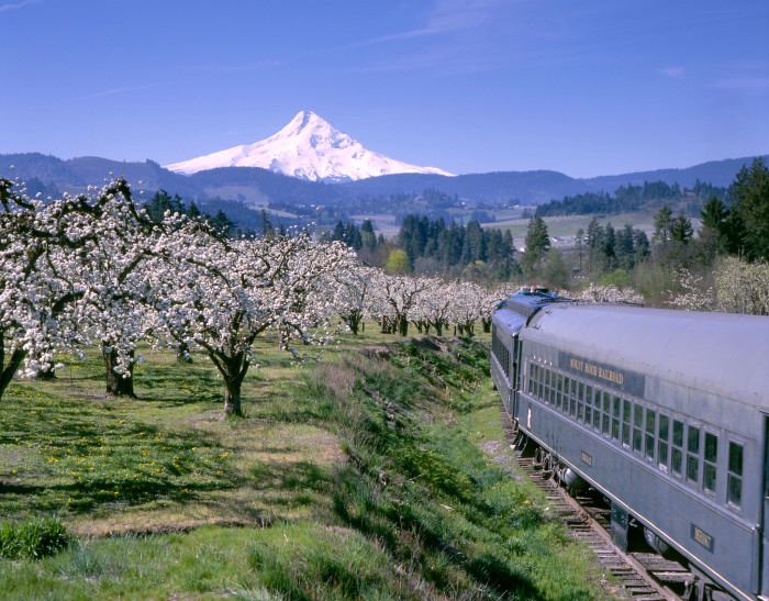 14. Spring orchards near Mount Hood: