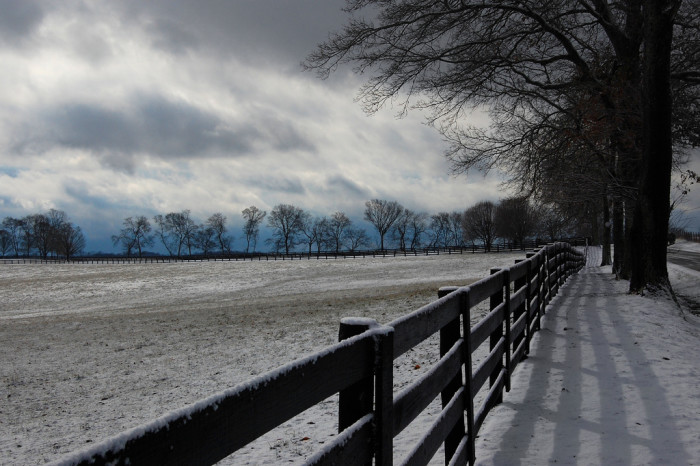 7. A snow frosted fence line.