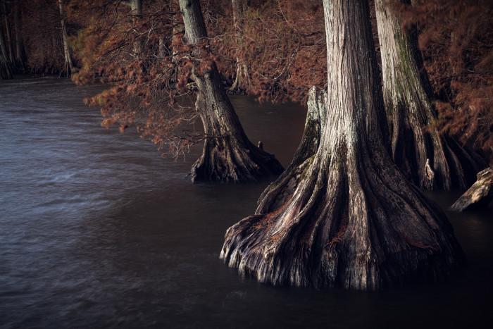 6) Reelfoot Lake State Park