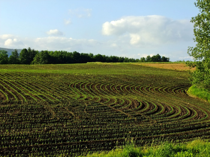 15. Pictured above on a Mayfield farm, you can see the gorgeous lines flowing throughout the field. Mesmerizing!