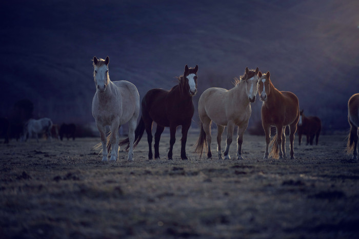7. A curious group of horses at sunset.
