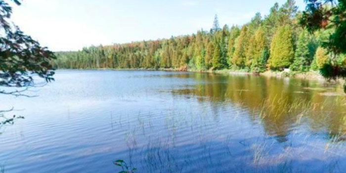 Benson Lake also lies in the park and offers great fishing and a fun place to camp.