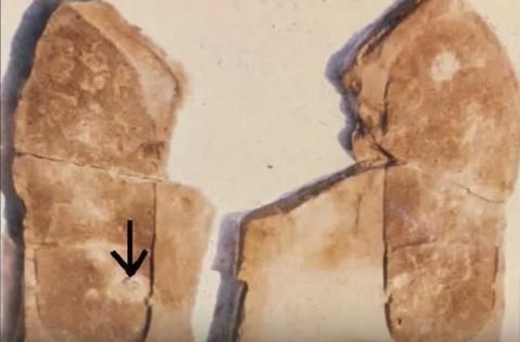8. Did Humans Walk at Antelope Springs 500 Million Years Ago?