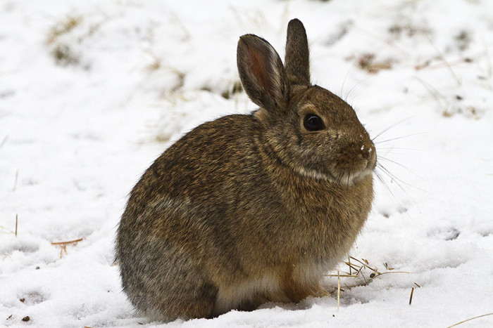 7. Bunny Hugger