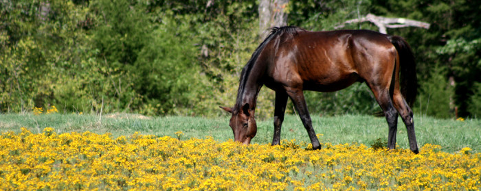 6. A horse! A beautiful horse! And yellow flowers!