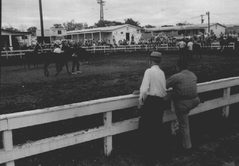 15. Tennessee walking horse celebration in Shelbyville