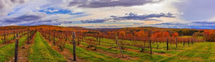 1. A gorgeous panorama of an Upstate vineyard.