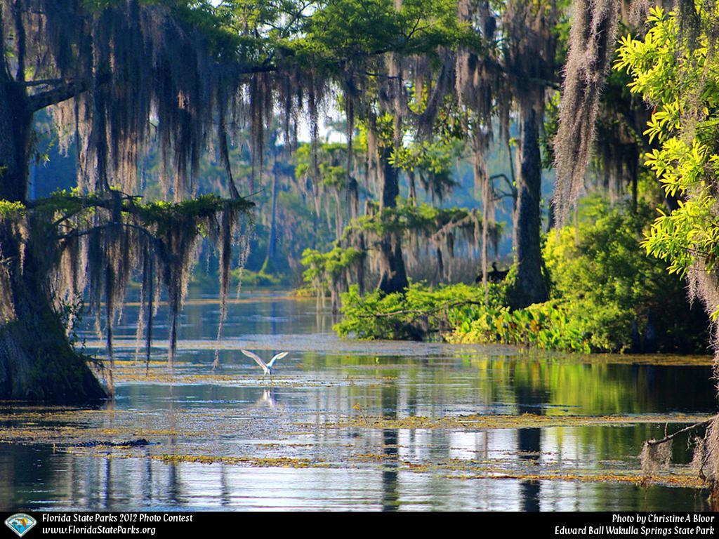 Biggest Island In The World >> Florida's Wakulla Springs Are Some of The World's Best