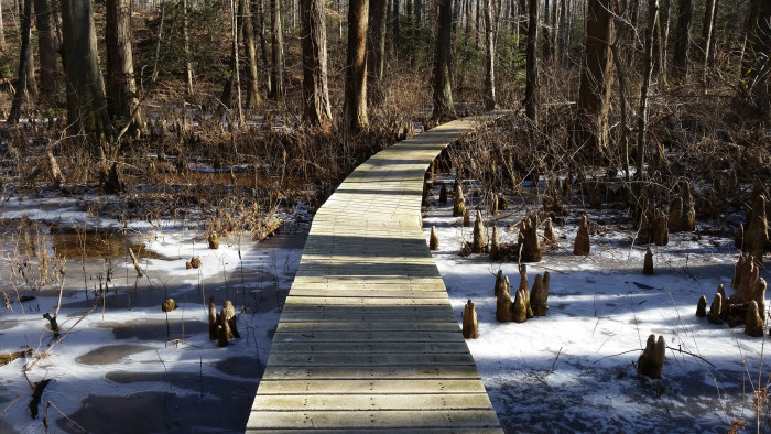 5) Explore the trails of Battle Creek Cypress Swamp.