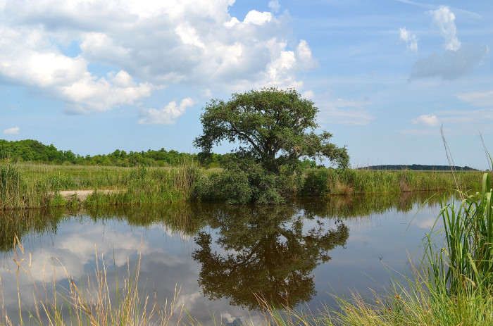 11. Bear Island Wildlife Management Area in the Ace Basin of South Carolina.