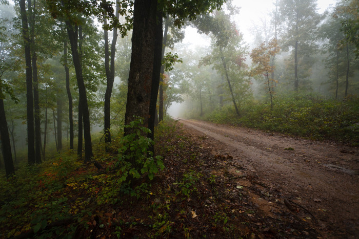 2. Foggy Road In Bidville
