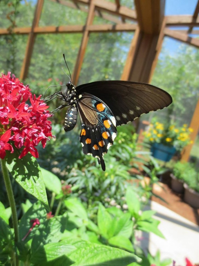 9. Botanical Garden of the Ozarks