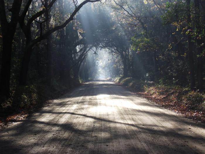 botany-bay-avenue-of-oaks