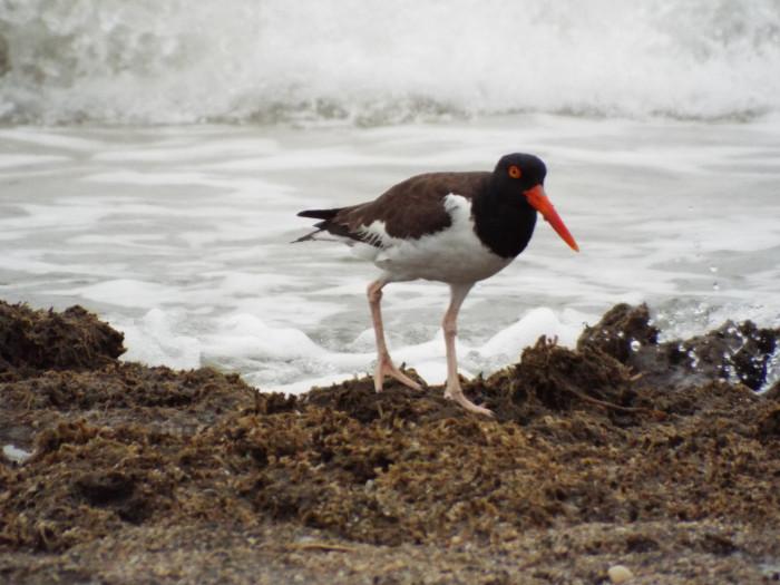 botany-bay-bird