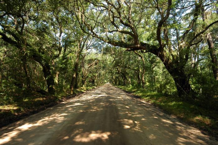 botany-bay-live-oak-canopy