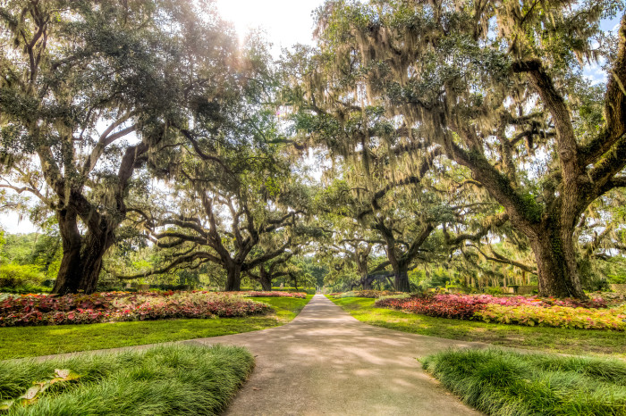 4. Brookgreen Gardens in Murrells Inlet is gorgeous! This almost looks like a painting it's so perfect.