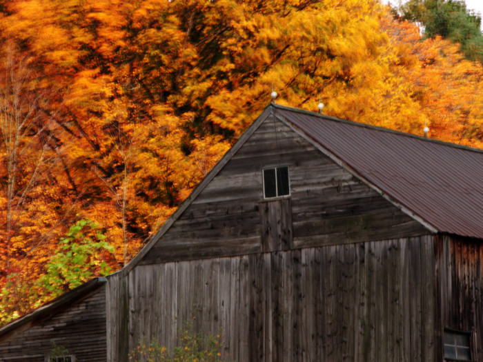 14. This dim barn against the vibrant leaves is gorgeous.