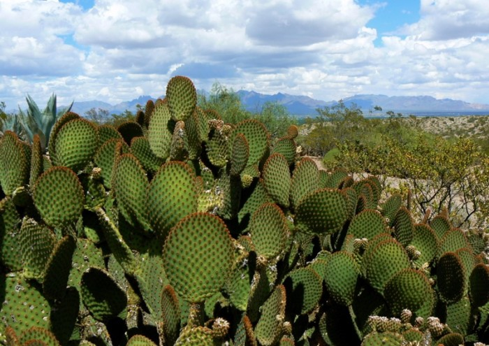 10. New Mexico is carpeted with wildflowers and cacti, like these ones near Las Cruces.