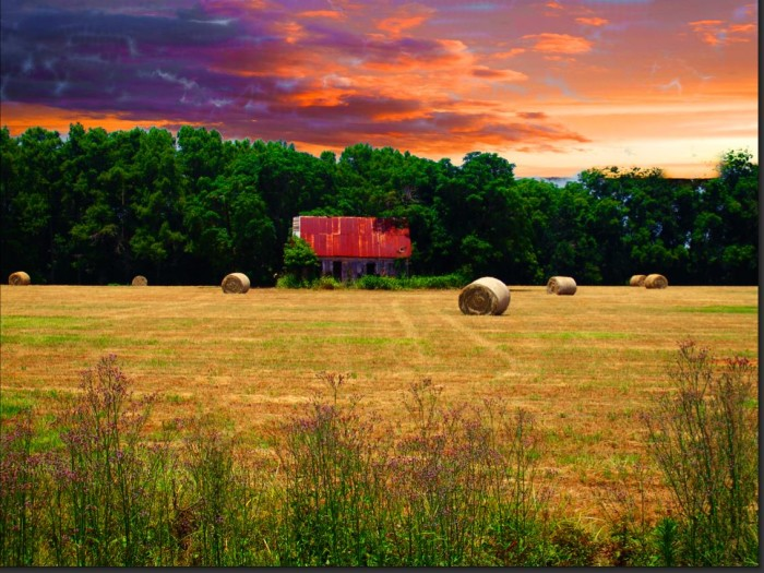 12. Yep, Rural Louisiana Is the Place to Be