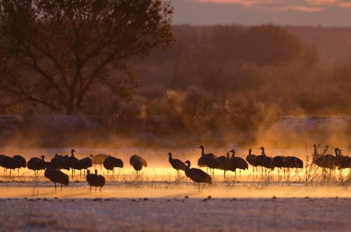 11. Wildlife, especially birds like sandhills cranes, fly through New Mexico.
