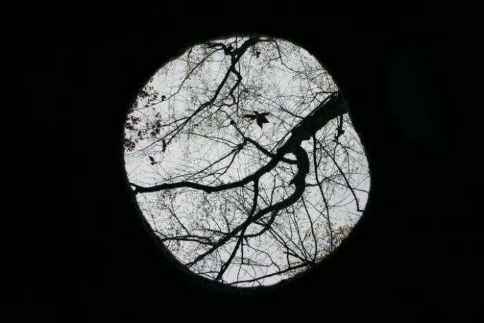crucible-oculus-sc-botanical-garden