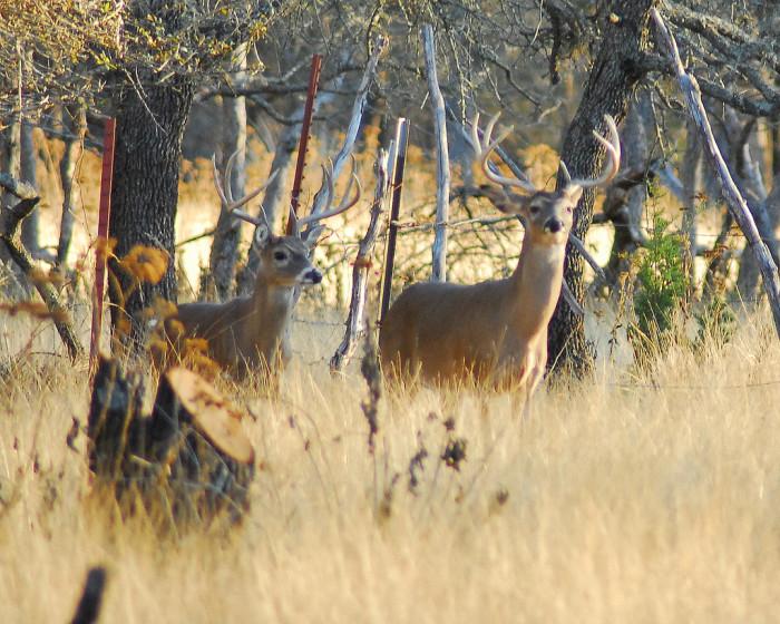 5. Deer hunting during Thanksgiving week