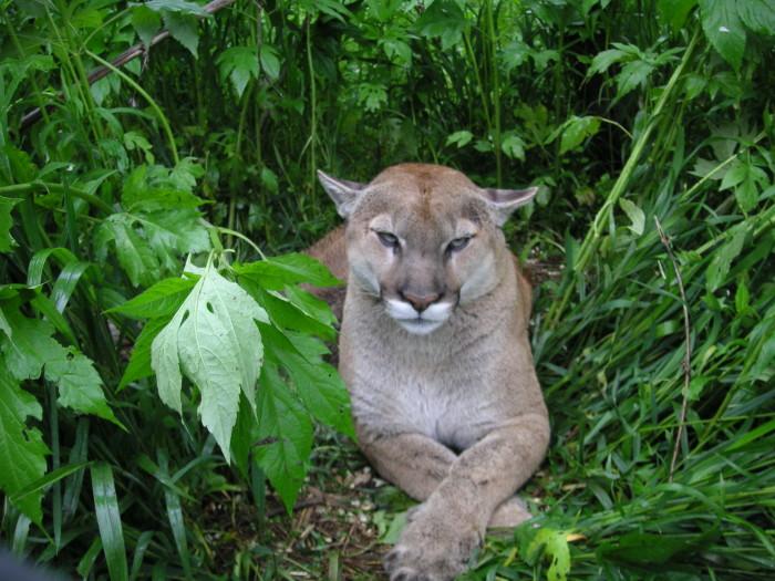 9. Exotic Feline Rescue Center
