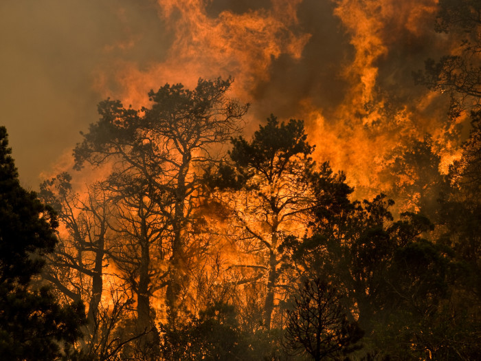 3. Forest fires
