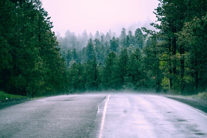 12. The fog makes this road through the Jemez Mountains appear surreal and enchanting.