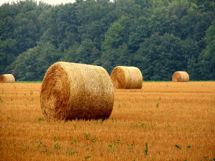 5. Hay stacks in an unnamed Michigan location.