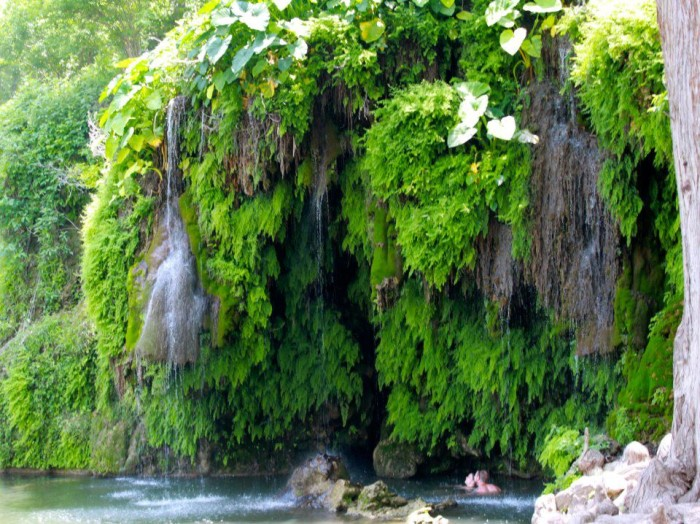 This kind of lush greenery is rare for the hill country...it just adds to the splendor.